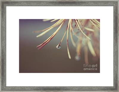Neigerelle - 06a Framed Print by Variance Collections