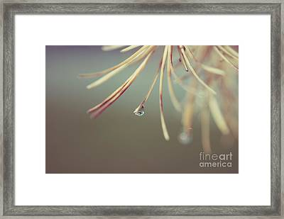 Neigerelle - 06b Framed Print by Variance Collections