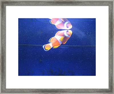 Nemo Framed Print by Davor Sintic