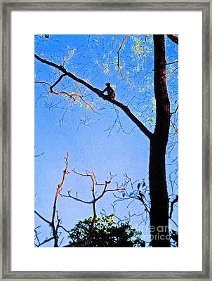 Nepal Monkey Watching Framed Print by First Star Art
