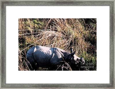 Nepal Rhino In The Wild Framed Print by First Star Art