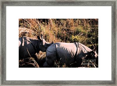 Nepal Rhinos In The Wild Framed Print by First Star Art