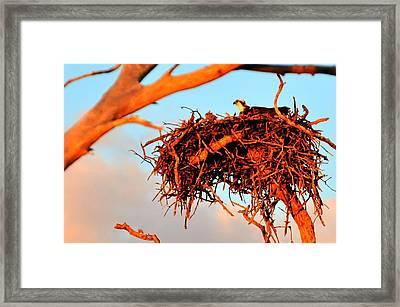 Nest Framed Print by Barry R Jones Jr