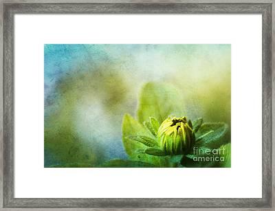 New Beginnings Framed Print by Darren Fisher