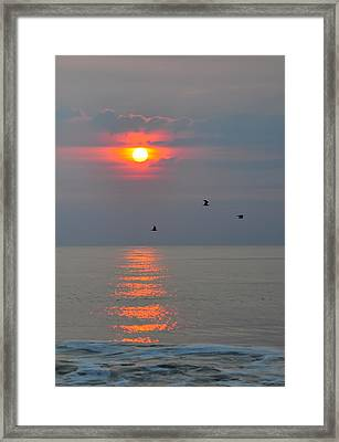 New Day Framed Print by Tazz Anderson