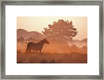 New Forest Pony In Mist At Dawn. Framed Print by Julie Mitchell/Southdowns Photographics