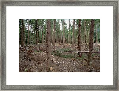 New Forestry Technique, Quinault River Framed Print by Gerry Ellis