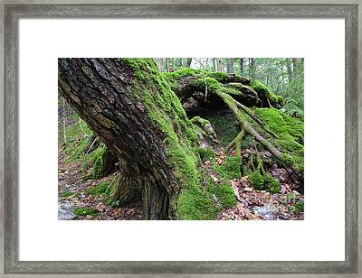 New Hampshire Usa Forest Framed Print by Erin Paul Donovan
