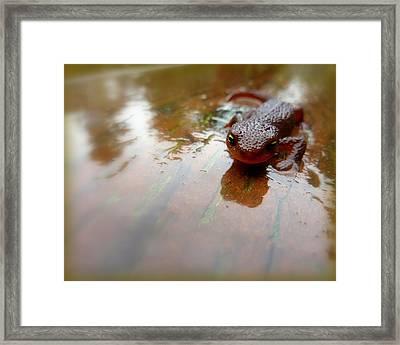 Newt Slip N Slide Framed Print by Cindy Wright