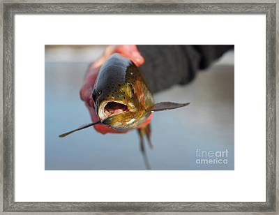 Nice To Meet You Framed Print by Tim DeMasters