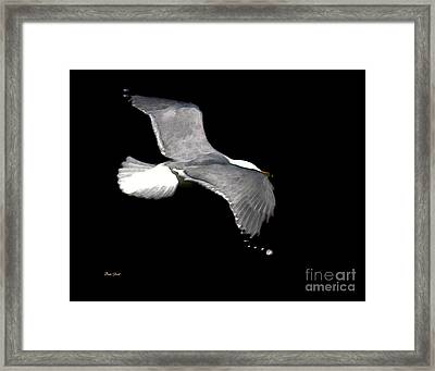 Night Flight Framed Print by Dale   Ford