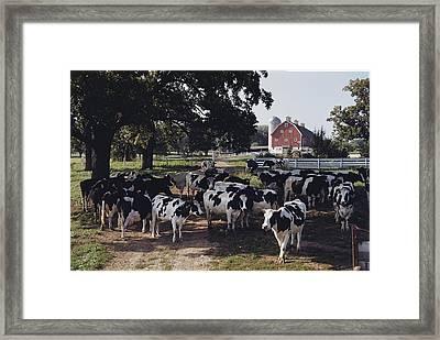 No Captions Framed Print by B. Anthony Stewart