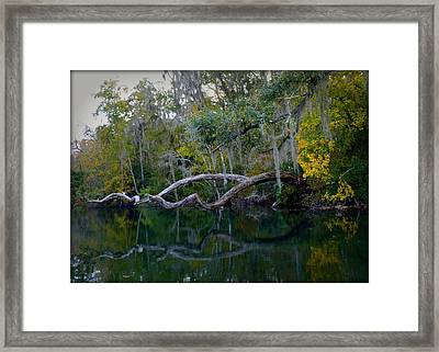 North Florida River Reflections Framed Print by Carla Parris
