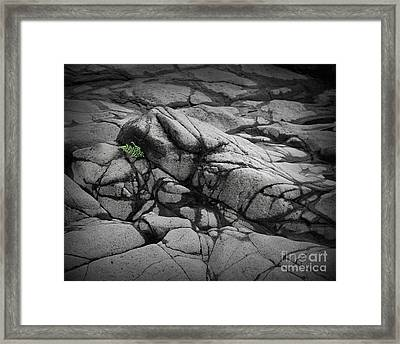 North Shore Fern Framed Print by Perry Webster