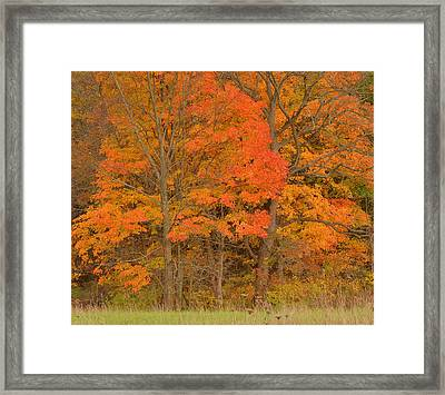Northeast Fall Colors Framed Print by Stephen  Vecchiotti
