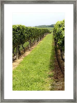 Northfork Vineyard Framed Print by Leslie Leda