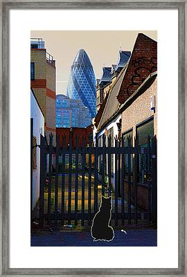 Not The Top Cat Framed Print by Jasna Buncic