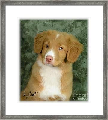 Nova Scotia Duck Toller Pup Framed Print by Maxine Bochnia