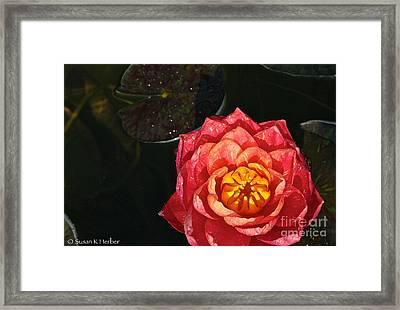 Nymphaea Framed Print by Susan Herber