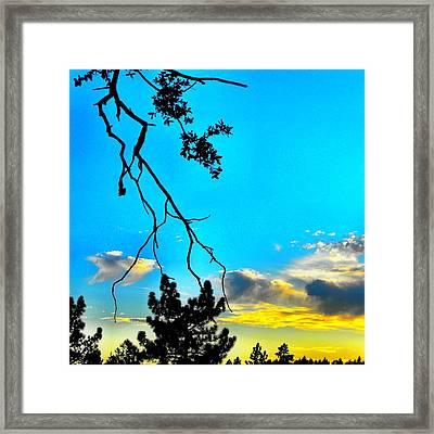 Oak Branch Framed Print by Skye Zambrana