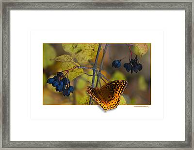 October Delight Framed Print by Ron Jones
