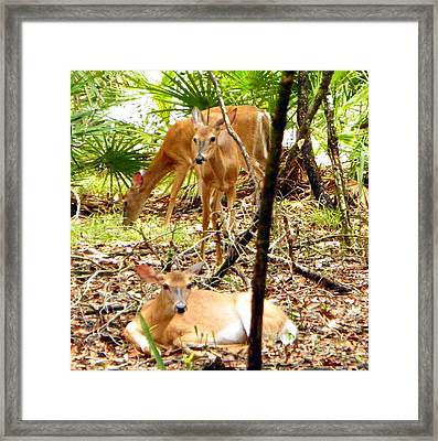 Oh Deer Three Framed Print by Sheri McLeroy