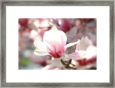 Oh Magnolia Framed Print by Jenna Mackay