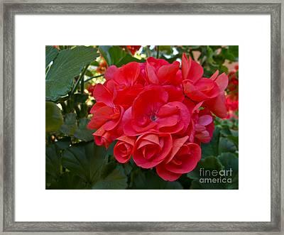 Oh My Red Framed Print by Arlene Carmel