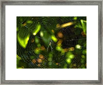 Oh The Web We Weave Framed Print by Barbara Middleton