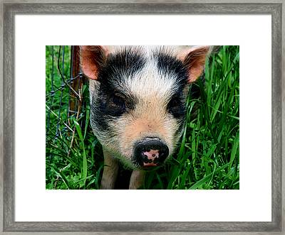 Oink-ing It Up... Framed Print by Elizabeth Gray