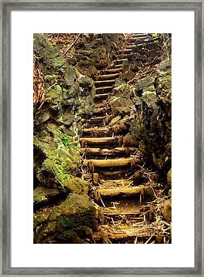 Old Forest Steps Framed Print by Dean Harte