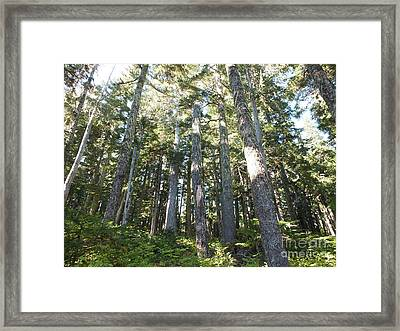 Old Growth Forest Framed Print by Shannon Ireland