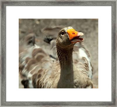 Old Mother Goose Framed Print by Karen Wiles