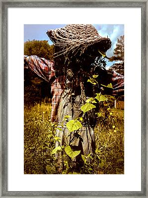 Old Scarecrow Framed Print by Kelly Rader
