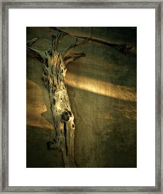 Old Tree In Sand Framed Print by Mario Celzner