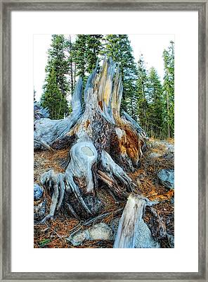 Old Warrior Framed Print by Donna Blackhall