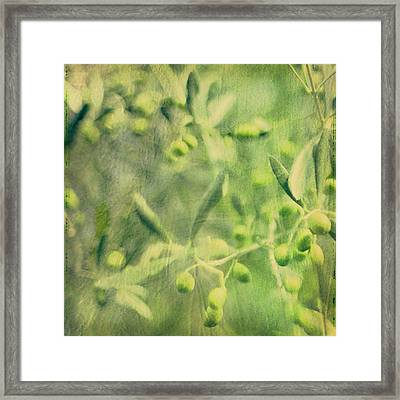 Olive And Leaf Framed Print by Linde Townsend