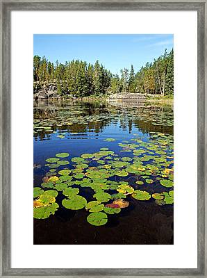 On A Lily Pond - 2 Framed Print by Larry Ricker