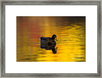 On Golden Waters Framed Print by Mike  Dawson