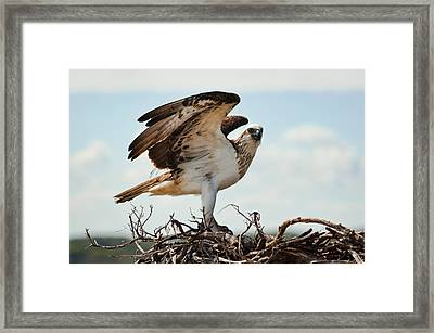 On Guard Framed Print by Heather Thorning