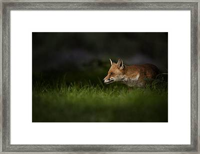 On High Alert Framed Print by Andy Astbury