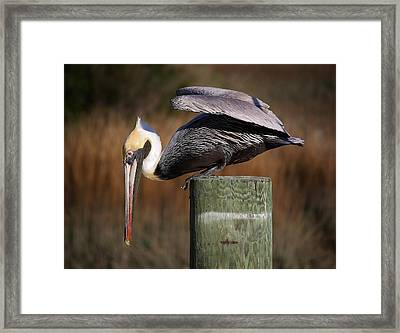 On The Edge Framed Print by Paulette Thomas
