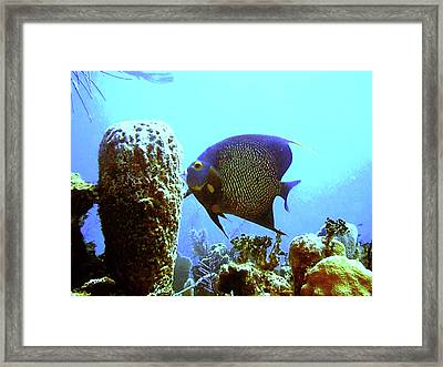 On The Reef Framed Print by Barry Jones