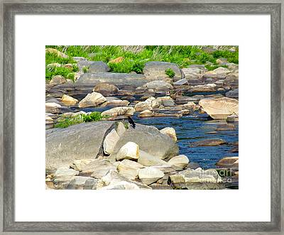 On The Rock Framed Print by Randi Shenkman