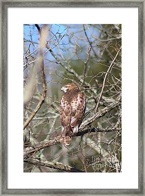 On The Watch Framed Print by Laurinda Bowling