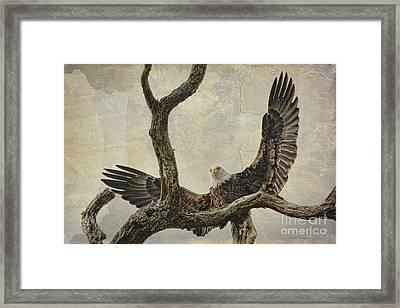 On Wings High Framed Print by Deborah Benoit