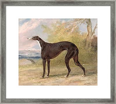 One Of George Lane Fox's Winning  Framed Print by George Garrard