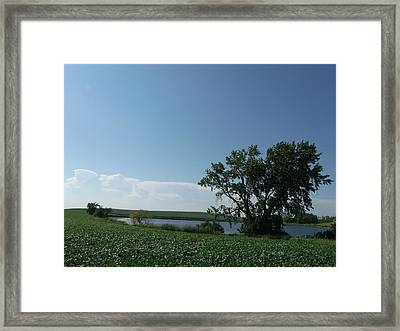 One Tree Farm Lake Framed Print by Brian  Maloney