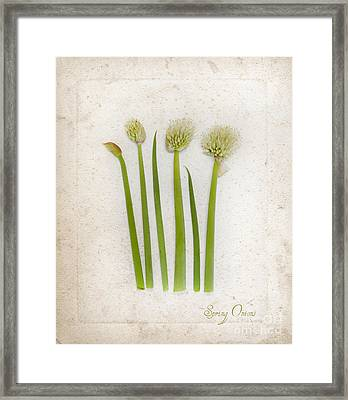 Onion Art Framed Print by Linde Townsend