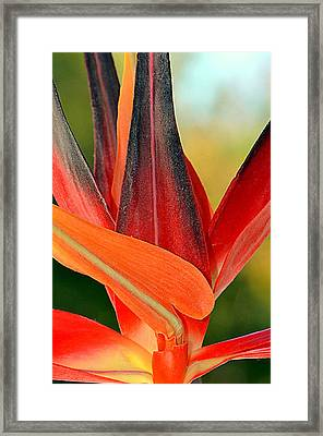 Only In Paradise...... Framed Print by Tanya Tanski